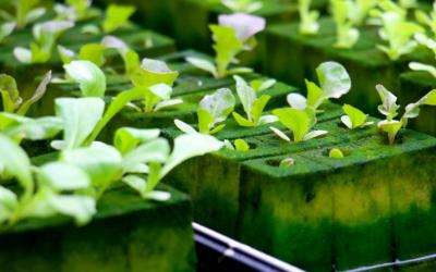 4 Kelebihan Urban Farming Dibanding Pertanian Konvensional