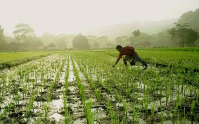 Ahli : Tidak Ada Kekhawatiran Soal Regenarasi Petani