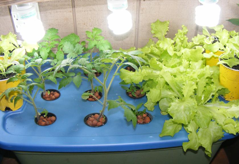 Aeroponik Sistem Pertanian untuk Masyarakat Perkotaan
